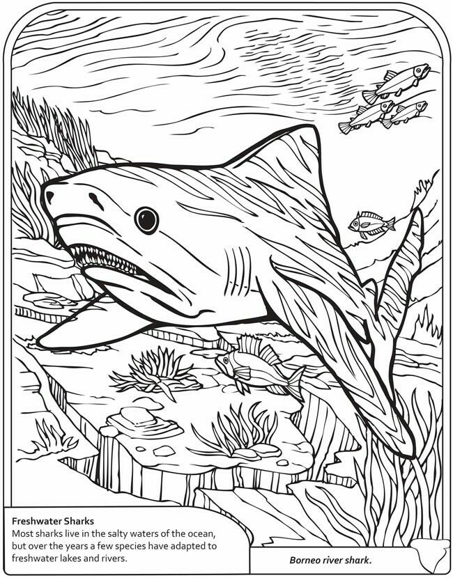 Pin By Emma On Homeschool Tools Dover Sampler And Similar Animal Coloring Pages Shark Coloring Pages Coloring Pages