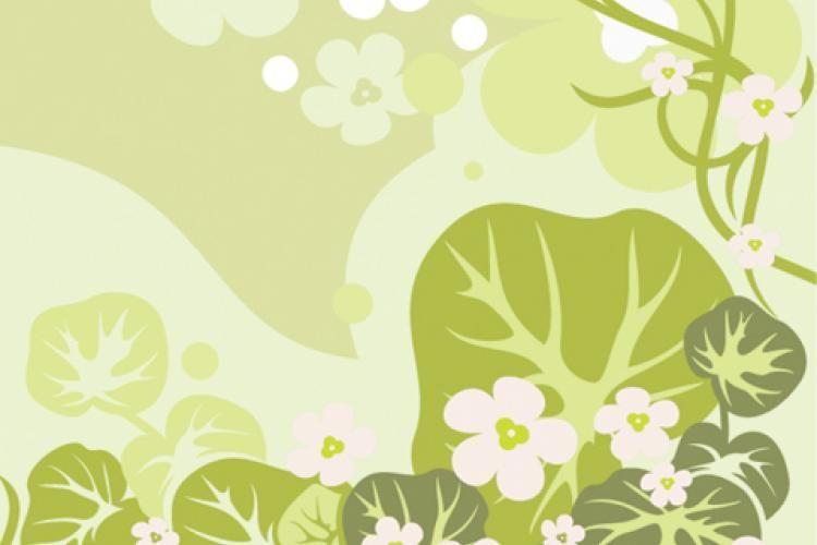 La mayoría de hierbas aromáticas que usamos son tan antiguas, que aun persisten los mitos asociados con ellas.