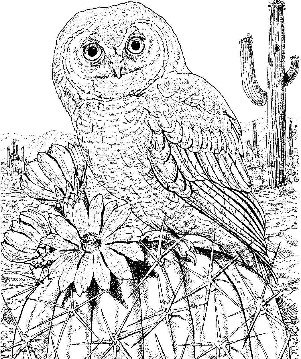 10 Difficult Owl Coloring Page For Adults Owl Coloring Pages Bird Coloring Pages Animal Coloring Pages