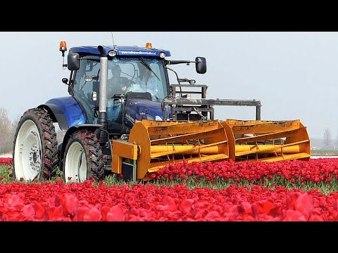 The Story of the Tulips | Planting to Harvest | One year at Maliepaard Bloembollen - YouTube