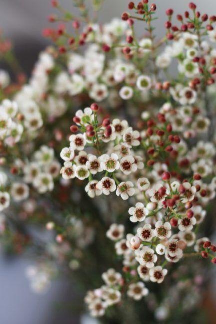 Photo of Lieblingspflanze im Dezember // Wachsblume – LENA BLUM