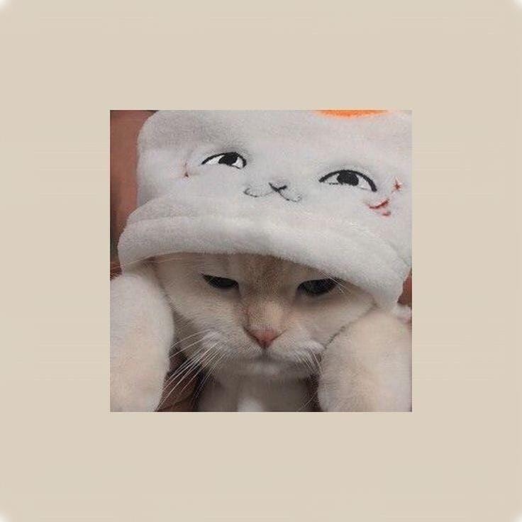 Ingin pakai profil whatsapp (wa) keren? Foto Kucing Aesthetic Lucu Kicau Sejati