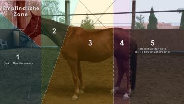 Die 5 + 1 Zonen des Pferdes nach Pat Parelli