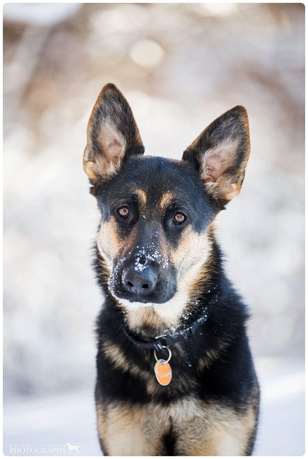 CT Pet Photographers Keira (With images) Pet