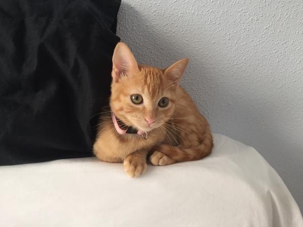 RENATA - Gato adoptado - AsoKa el Grande