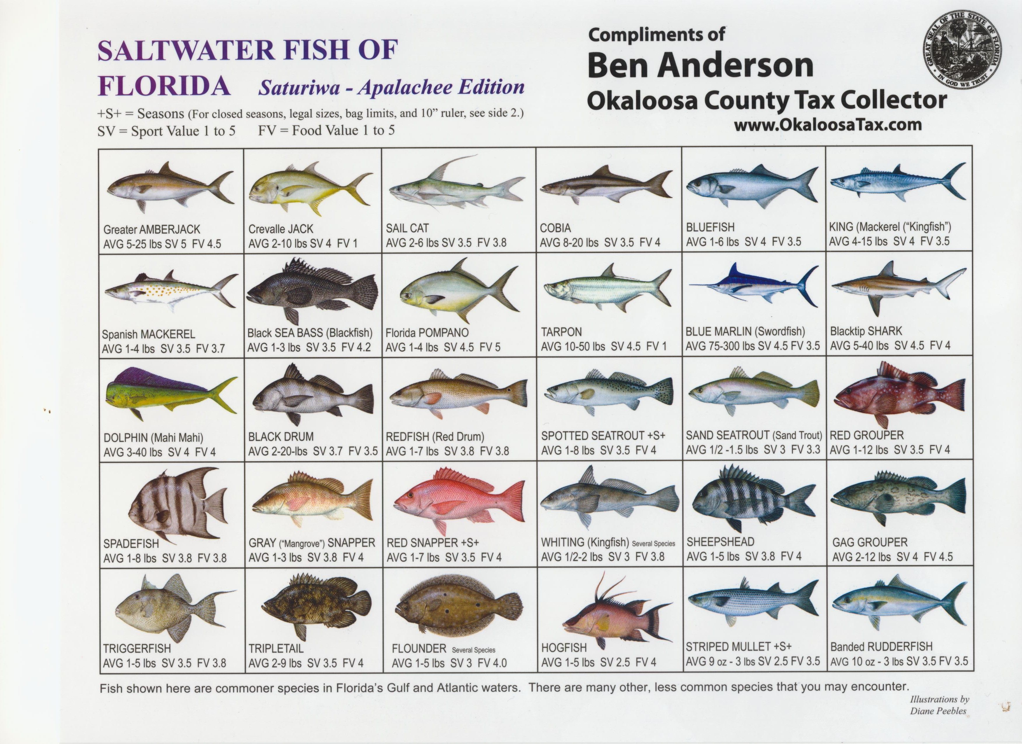 Free Salt Water Fishing Guide At The Octc Just Ask Salt Water Fishing Saltwater Fishing Fishing Guide