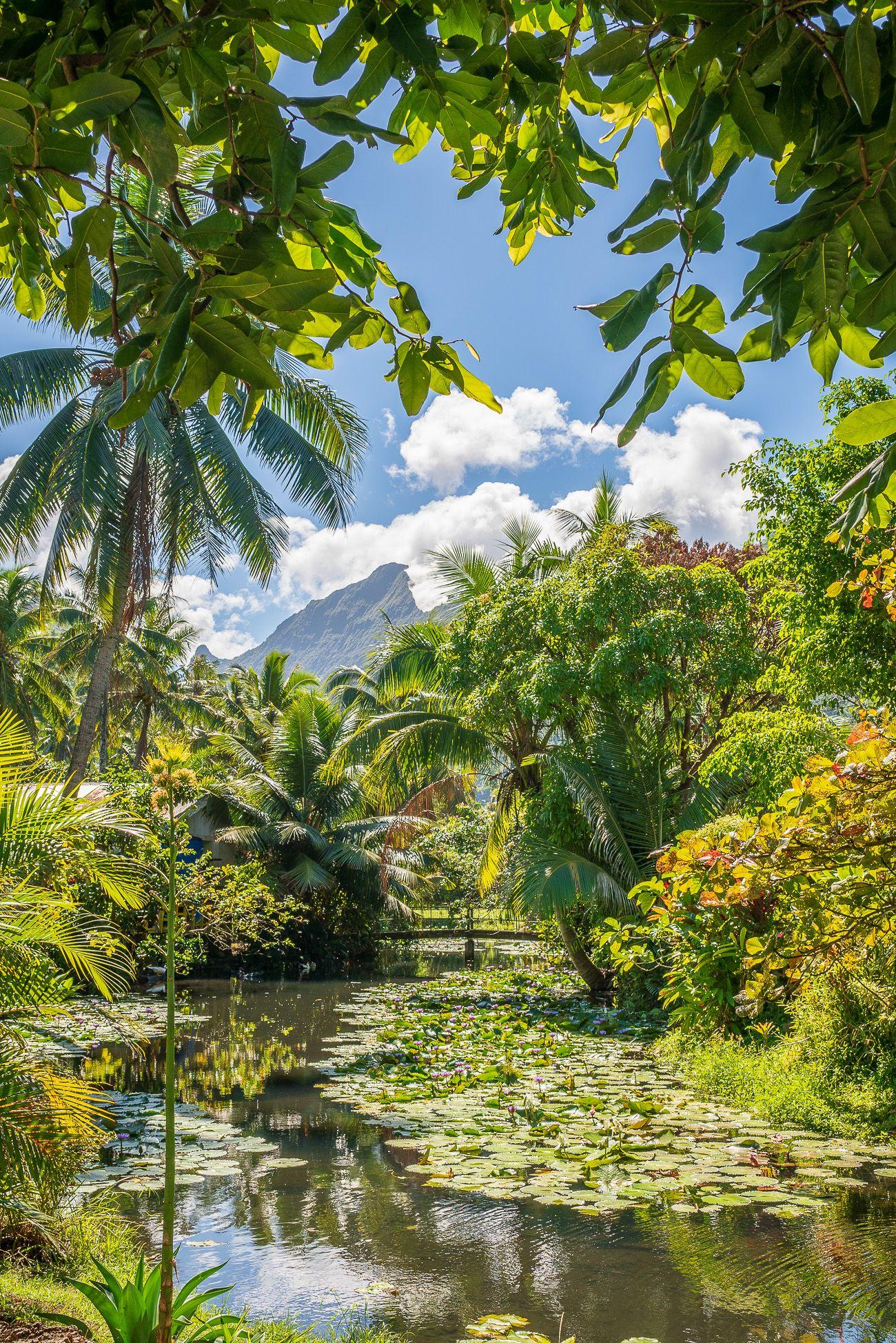 Bonnes adresses Tahiti et ses îles // La Penderie de Chloé, blog voyage.