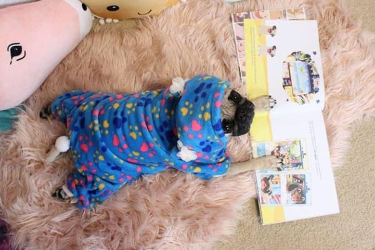Pin By John Walls On Pug World Pugs Pug Lover Cuteness Overload