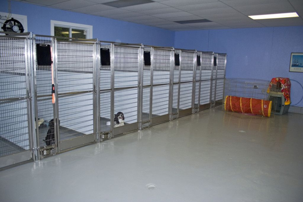 Dog kennels bing images ruffpups pinterest dog for What is dog boarding