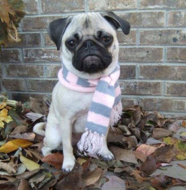 You like my scarf?