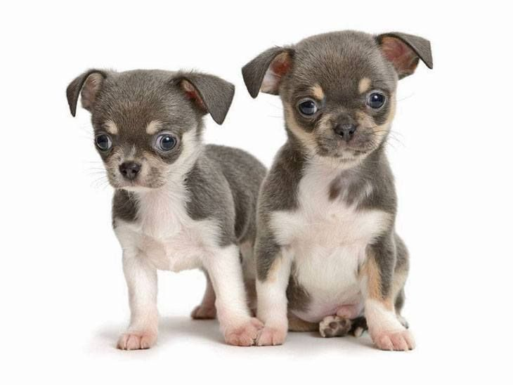 Boy puppy names hundreds of cute ideas for your dog
