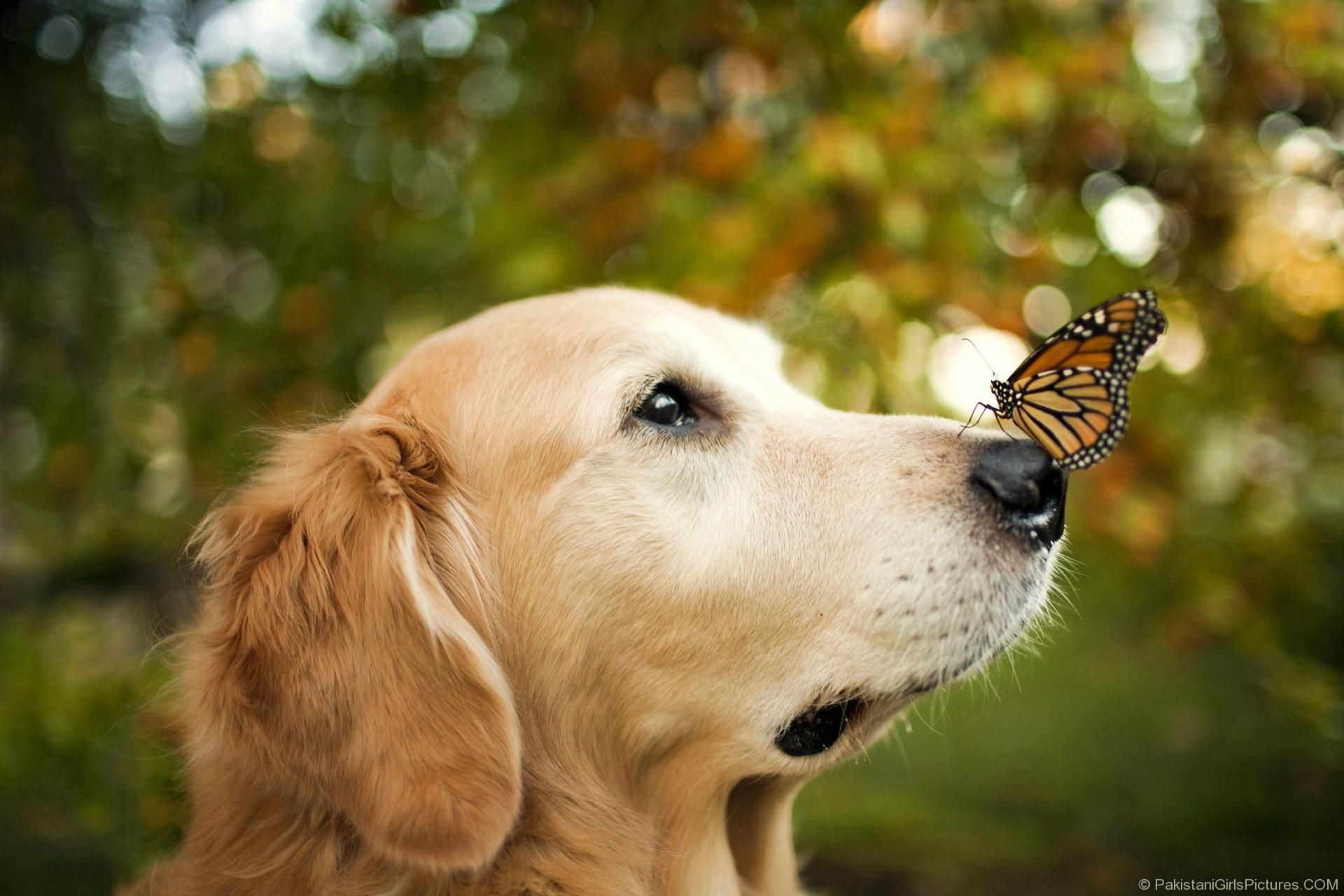 Beautiful dogs wallpapers yahoo image search results adorable