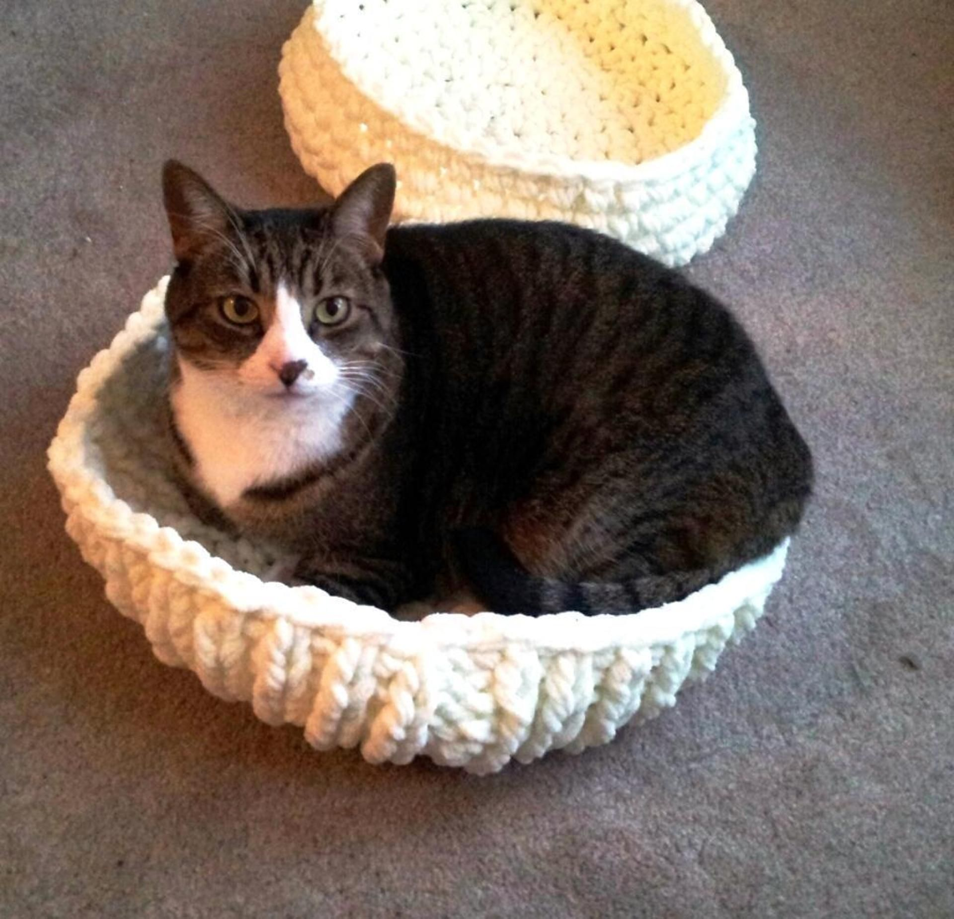 Knitted Kitty Bowl Bed | Pinterest | Dog beds, Kitty and Dog