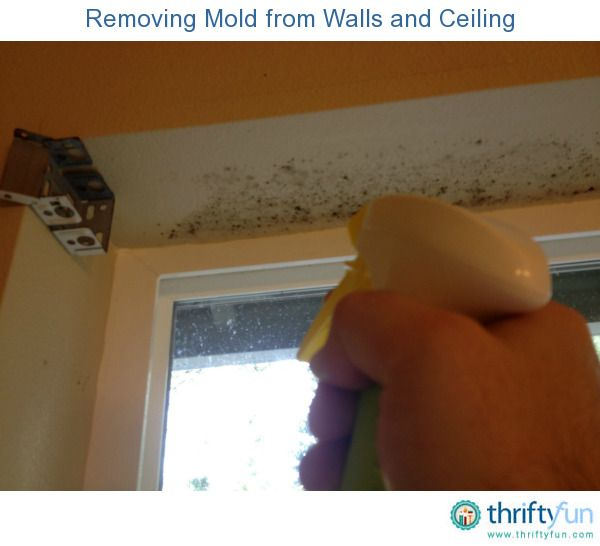 How To Clean Mold On Painted Walls And Ceiling Remove Mold Walls - Remove mold from bathroom ceiling