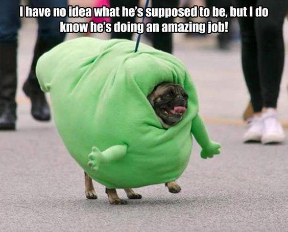 27 Boo Meme Cute Pugs Pugs Funny Pugs