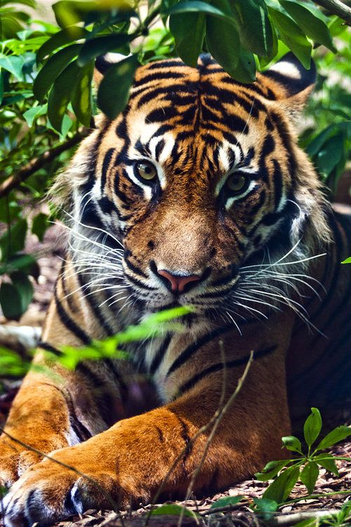 Jungle Queen by SaphoPhotographics.