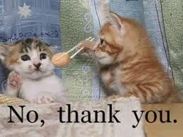 صور قطط مضحكة ثقافات العالم معلومات عامة Funny Cat Photos Funny Animal Pictures Funny Cat Pictures