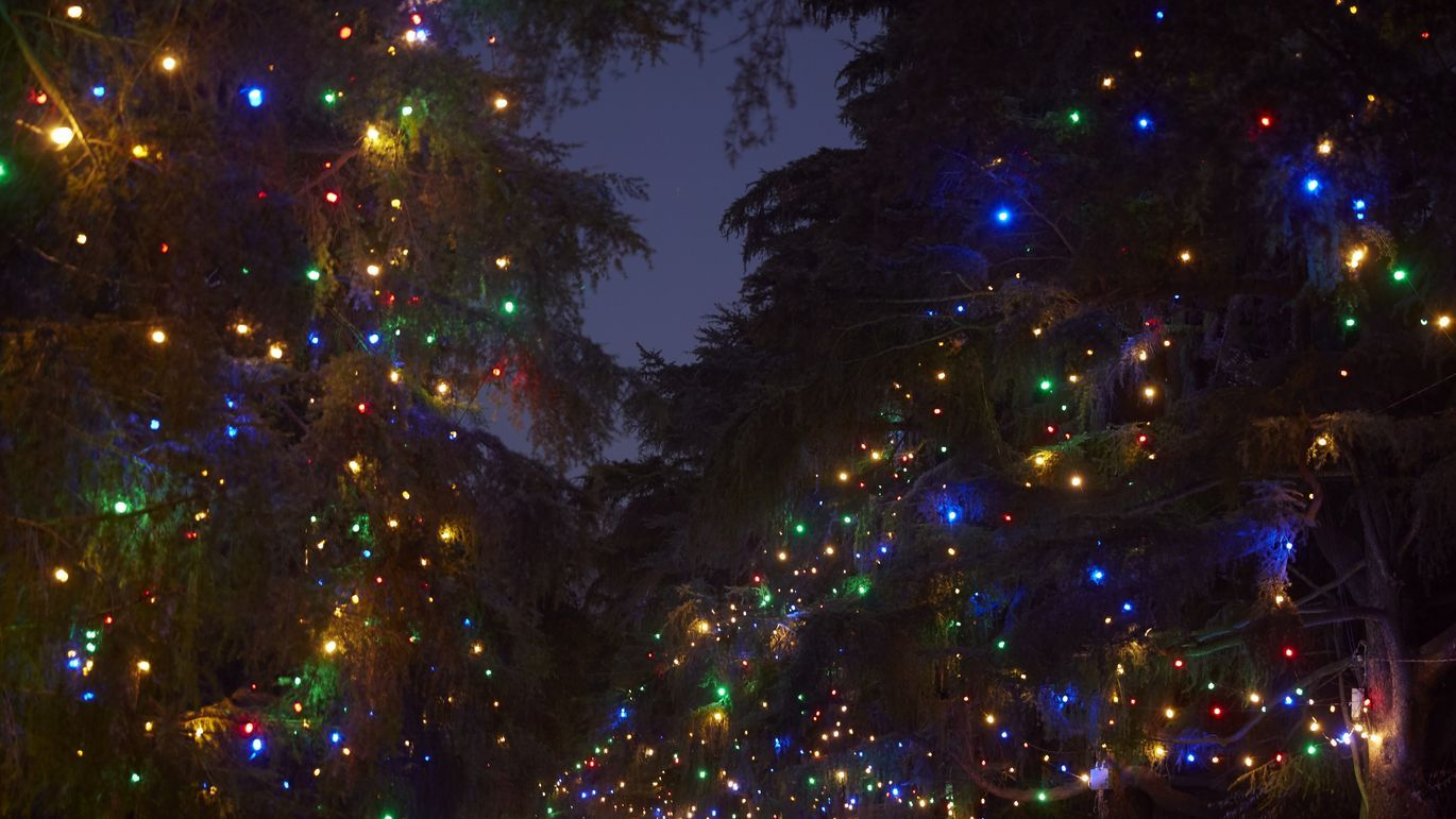 The Spectacle Of Altadena S Christmas Tree Lane Tree Outdoor Christmas Christmas Lights