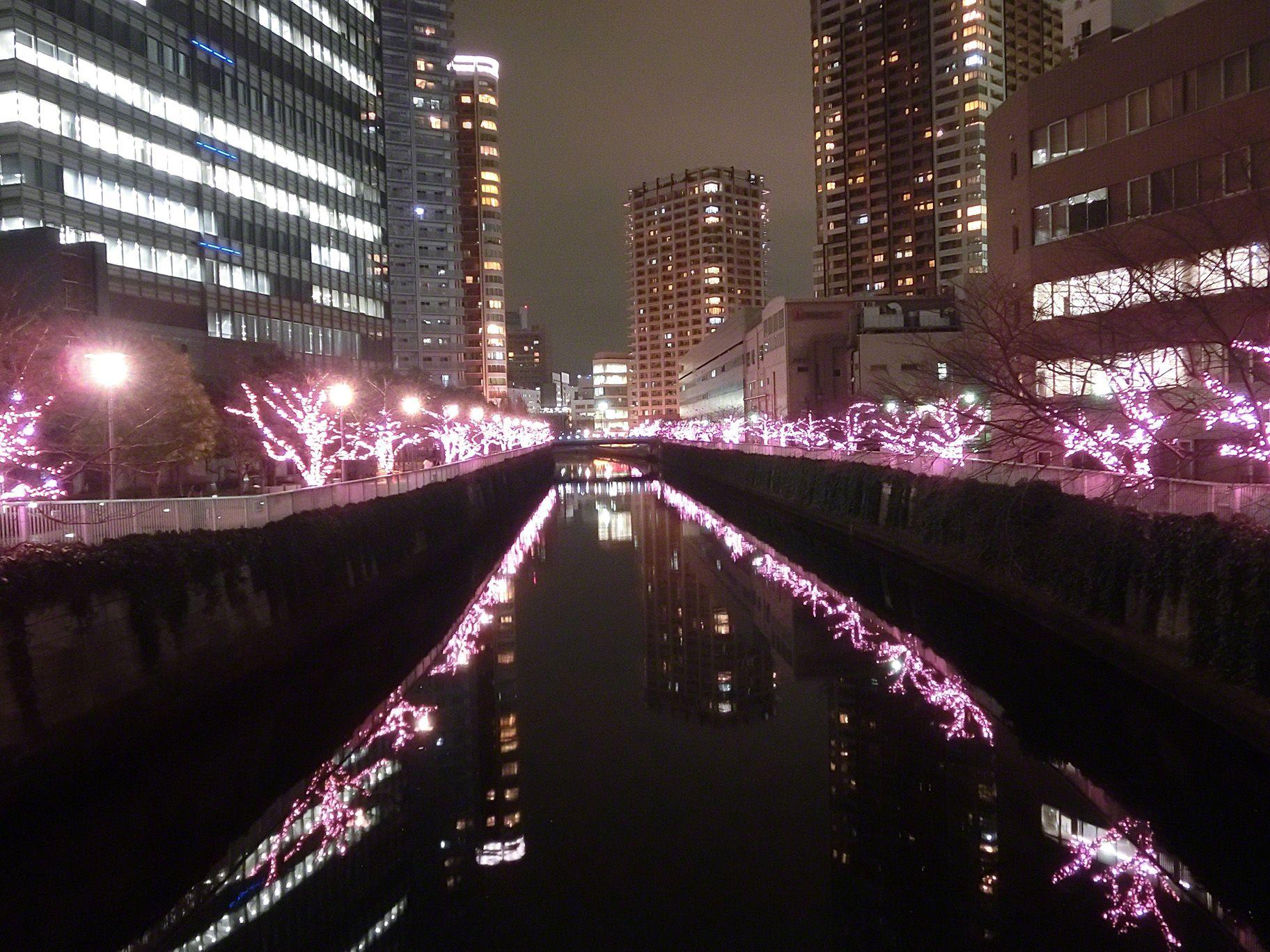 """""""Winter cherry"""" photographed by Osaki, Shinagawa-ku, Tokyo"""