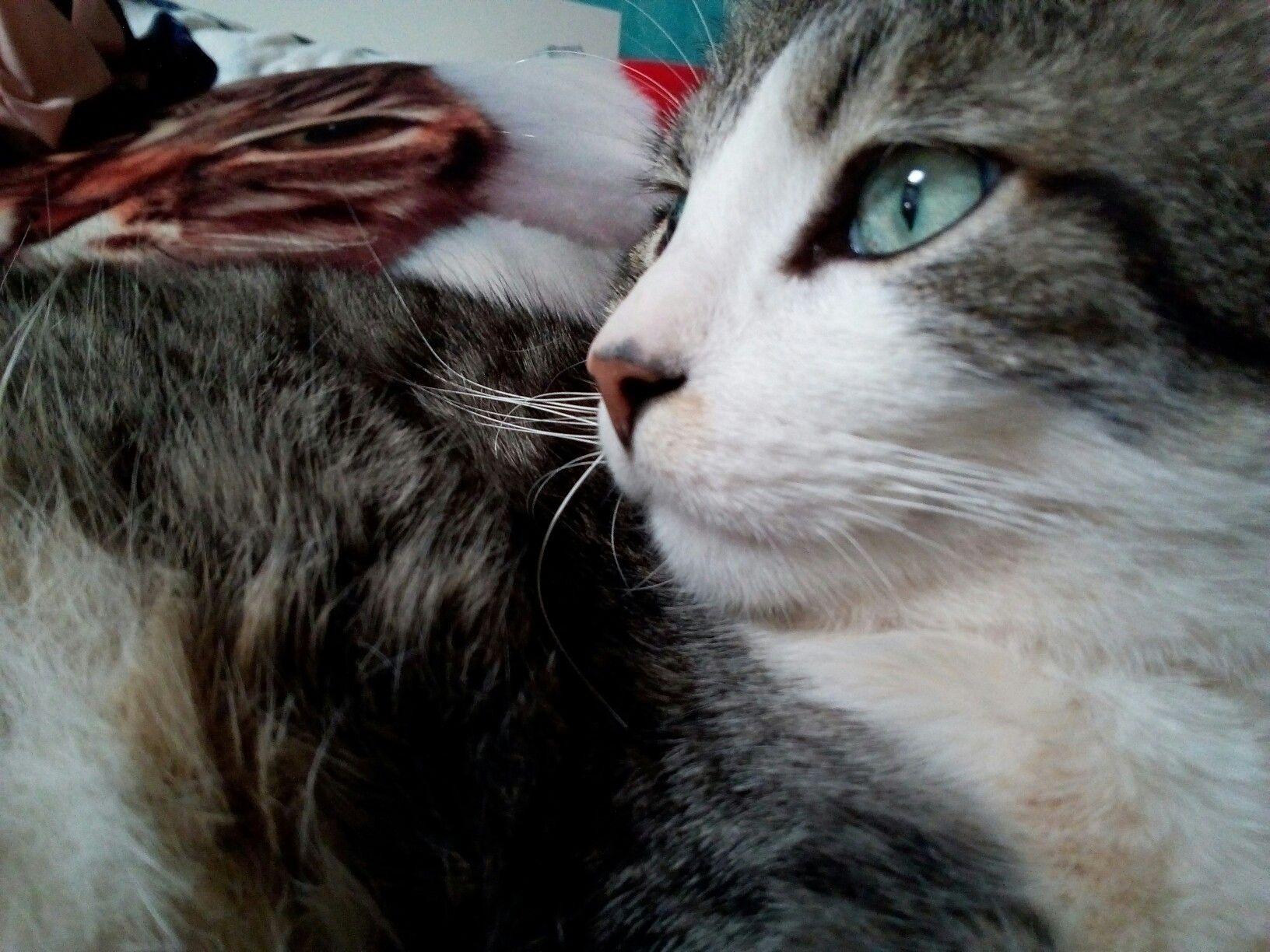 Merlin est très mignon chat  .C'est un gros chat 💖💖
