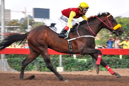 Liberal (PER) 2011 B.c. (Meal Penalty (USA)-Democracia (PER) by Pal The Gold (USA) 1st Clasico Enrique Meiggs (PER-G3,2000mD,Monterrico)