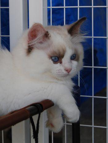 Mini Kitty Cat Cat Kawaii Kitty Mini In 2020 Kitty Cats Kawaii