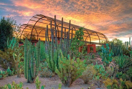Desert Botanical Garden Scottsdale Arizona Fun In Az Pinterest