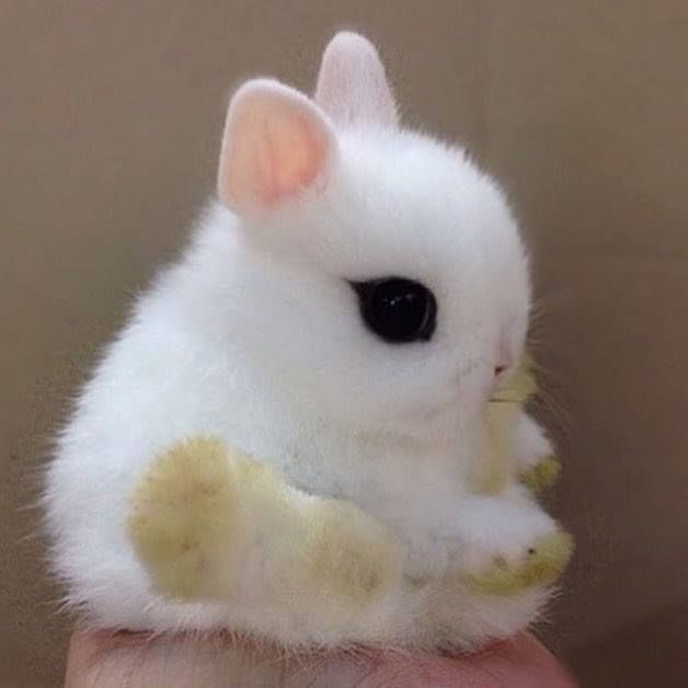 Image By Isabel Scally On Cute Animals Baby Animals Funny Cutest Bunny Ever Cute Little Animals