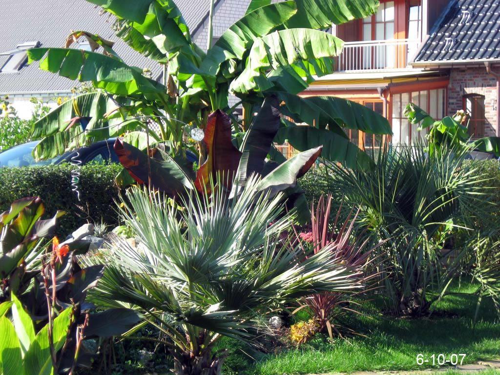 garten 2007 exoten und palmen claus willich outdoor garten und palmen. Black Bedroom Furniture Sets. Home Design Ideas
