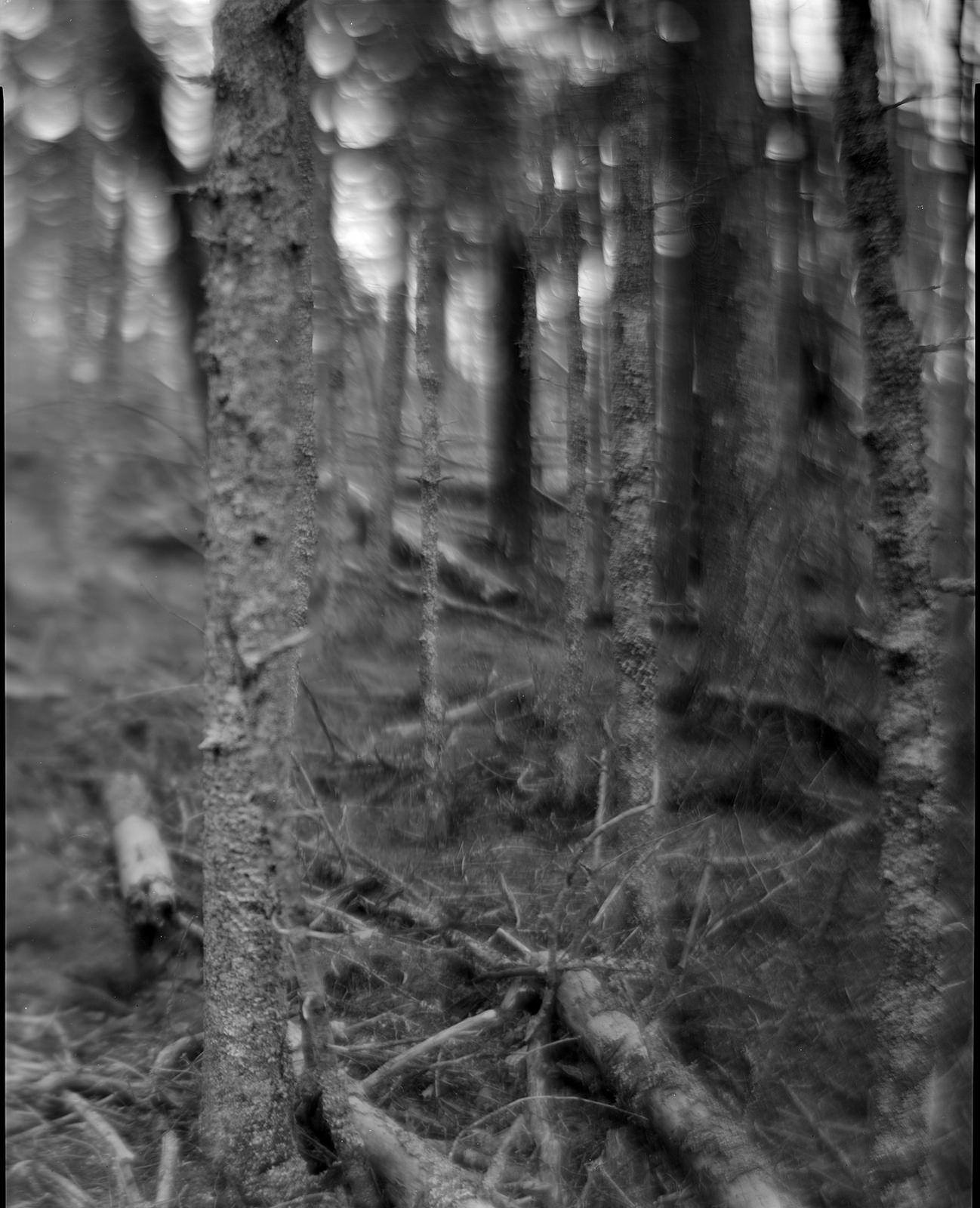https://flic.kr/p/qmY11u | img564 | trees at Birch Point Beach State Park, Owls Head Maine. December 2014. B&J 8x10 field camera and Kodak 305 portrait soft focus lens. tmy2 tmax 400 8x10 film in pyrocat hd