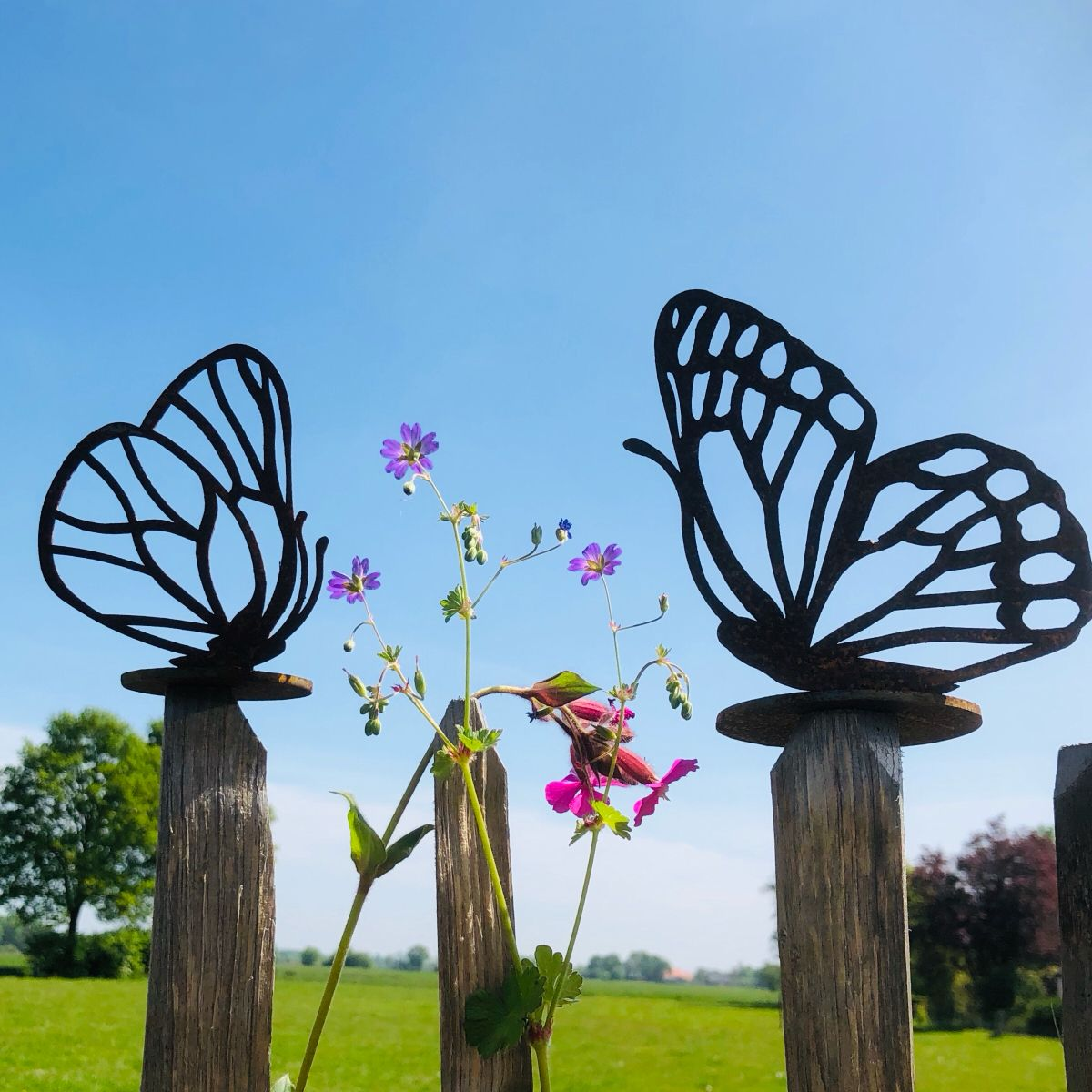 Schutting Decoratie Vlinder