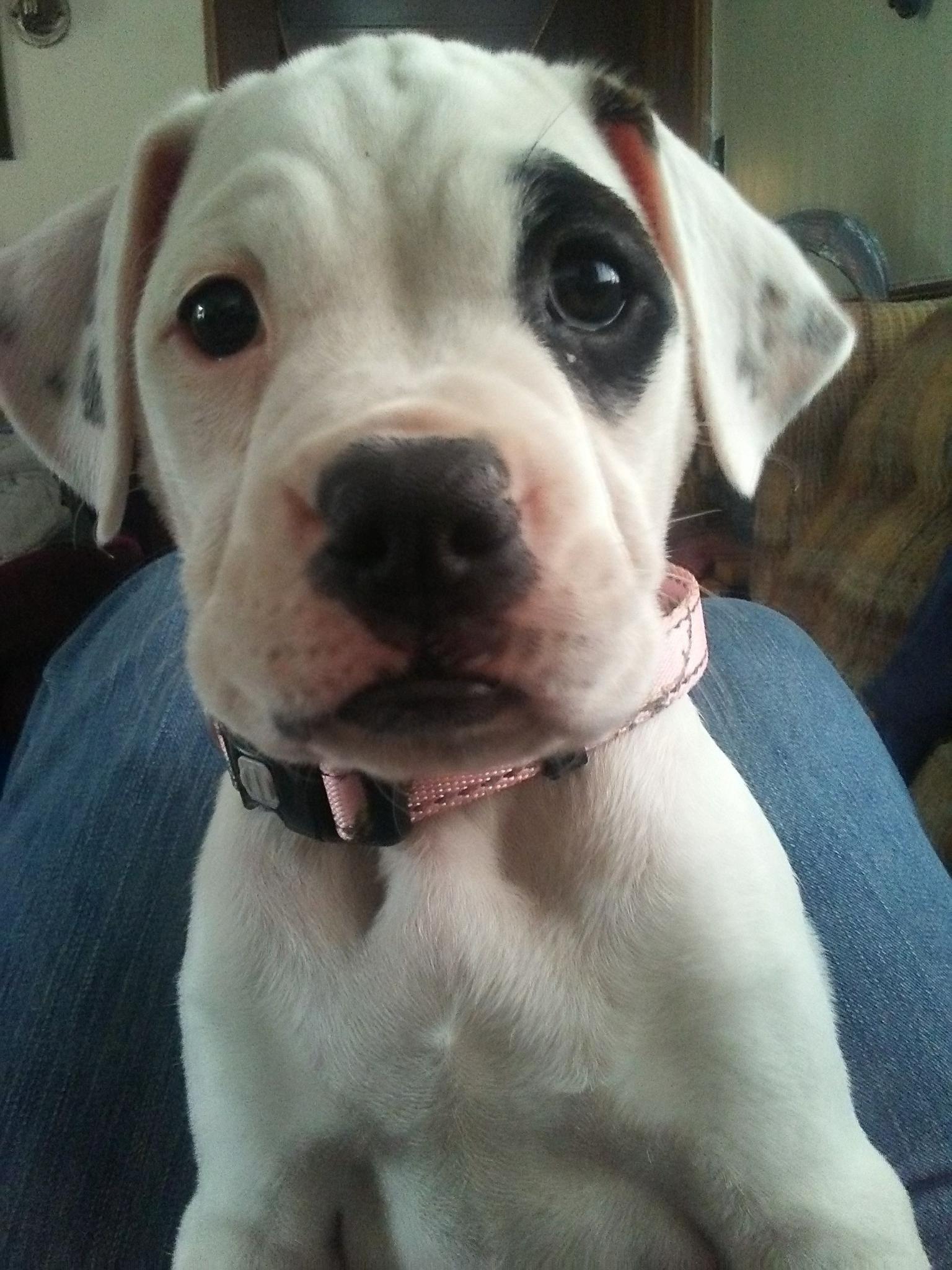 Reddit meet Sierra my new puppy https://ift tt/2I5nMEG | All