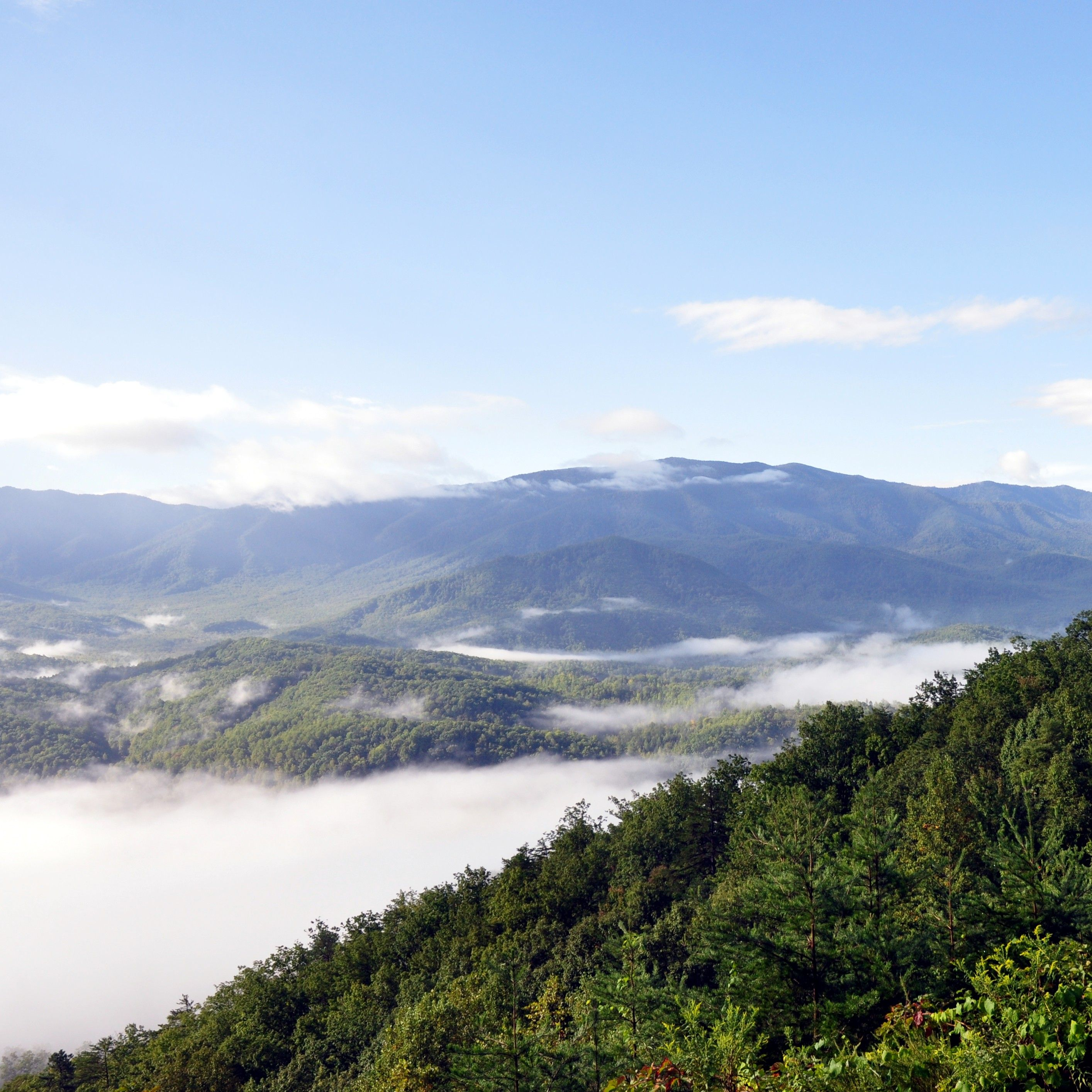 The Great Smoky Mountains Covered In Foggy Beauty East