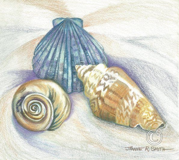 sea shell drawing | Sea Shells-Colored Pencil | Sea Shells ...
