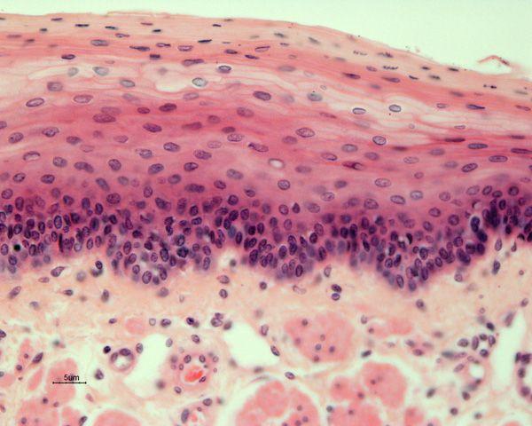 Anatomy tissue slides