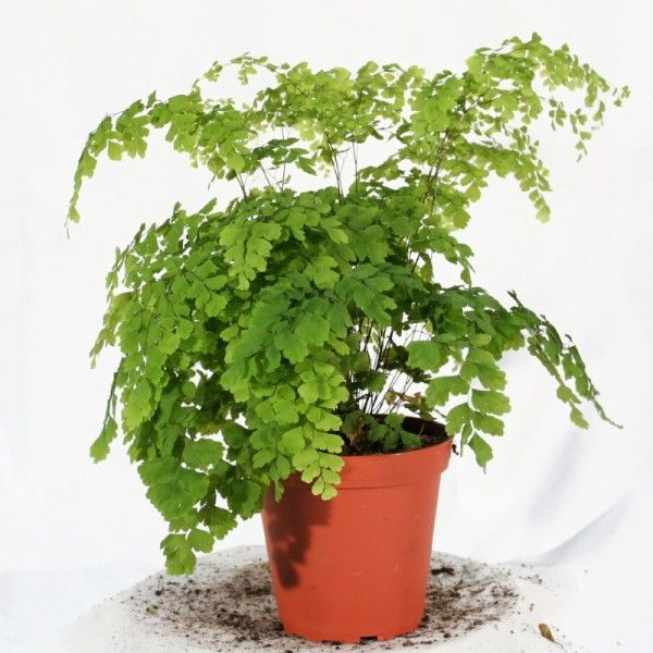 Plante exotique int rieur plante d 39 int rieur for Plante verte d interieur photo