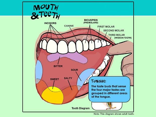 600092c6ac1c29d2aa72a12d22adfbd4 - How To Get My Kid To Stop Grinding Teeth