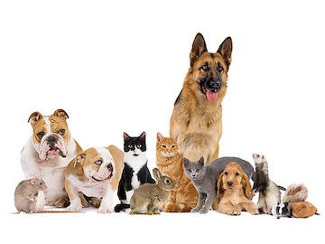 The Theraputic Benefits of Pets - Health and Wellness for Families - 1-888-663-4990