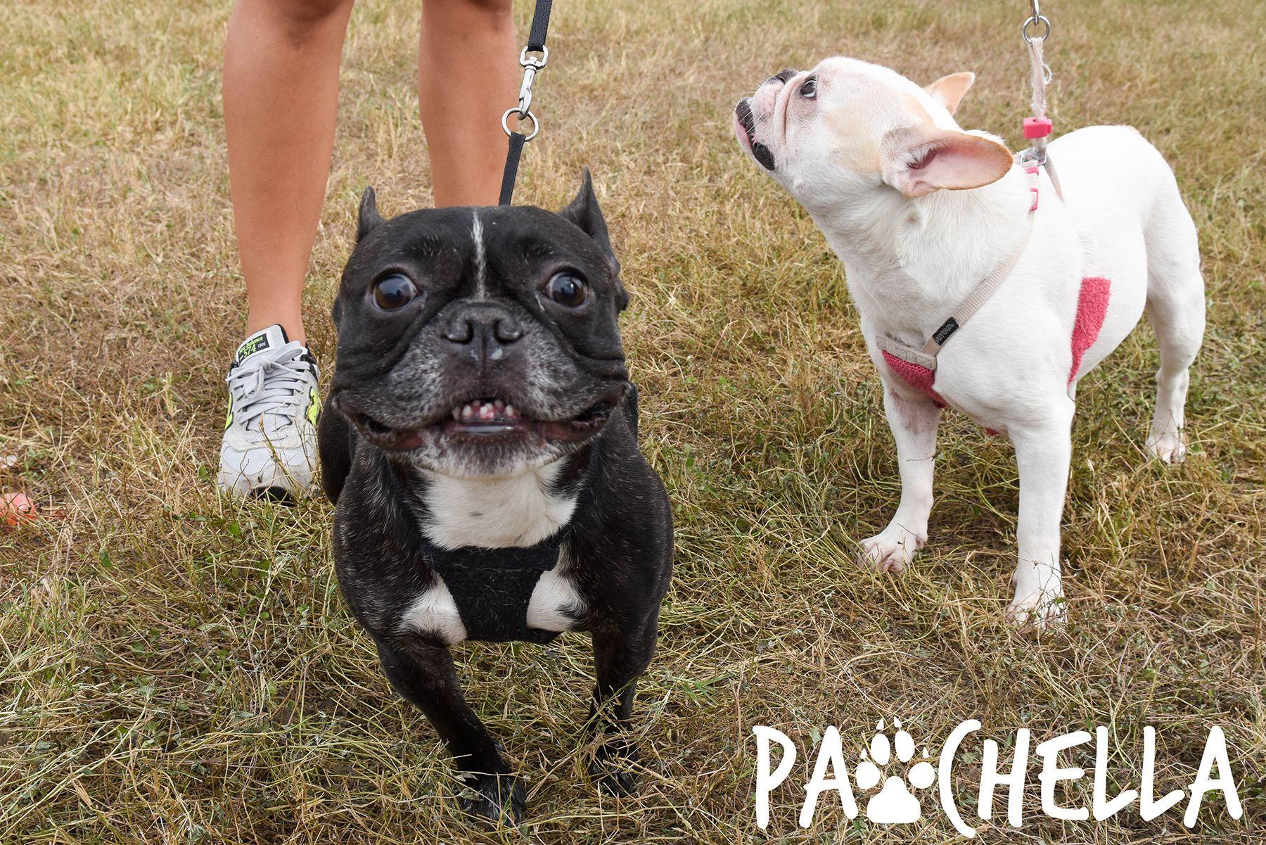 Pin by San Antonio Humane Society on Pawchella 2016
