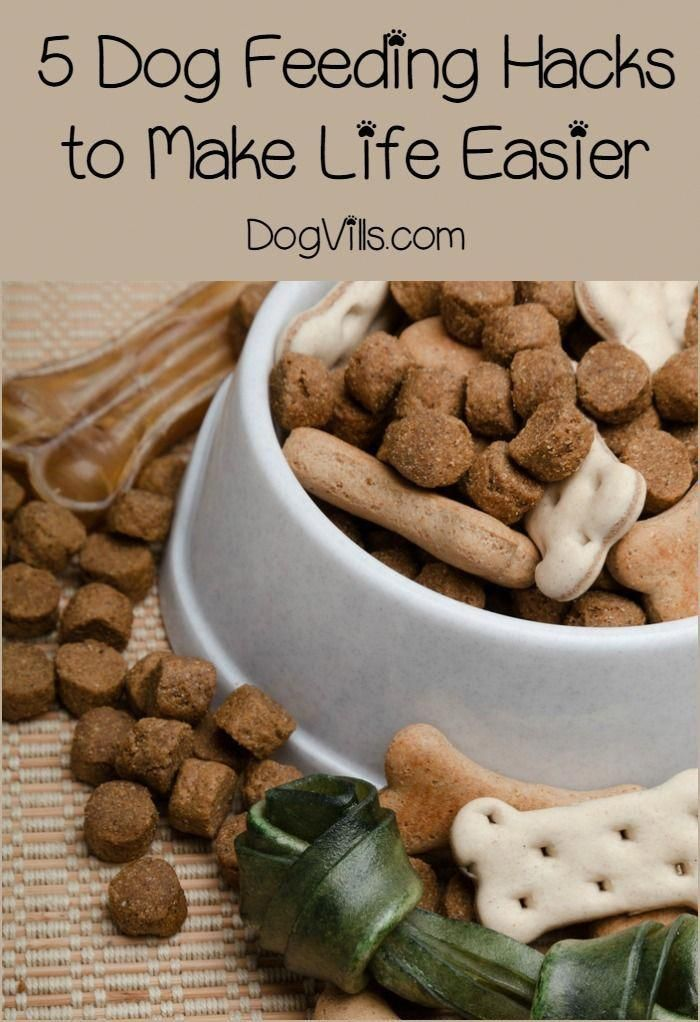 5 Dog Feeding Hacks That You Want to Know Right Now # ...