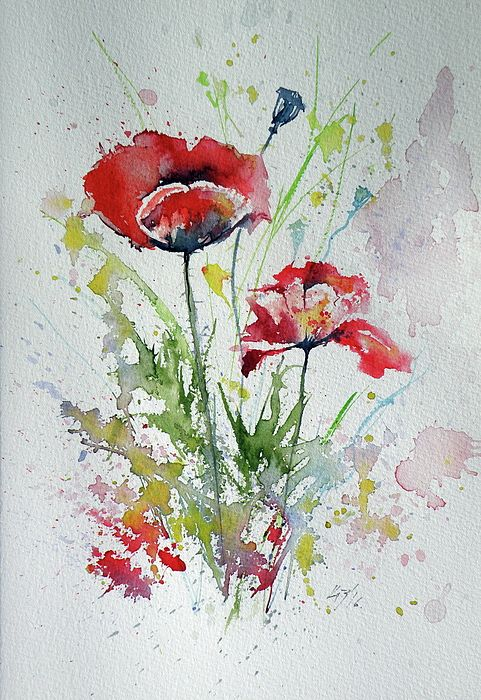 Little Poppies Watercolor Poppies Watercolor Flowers