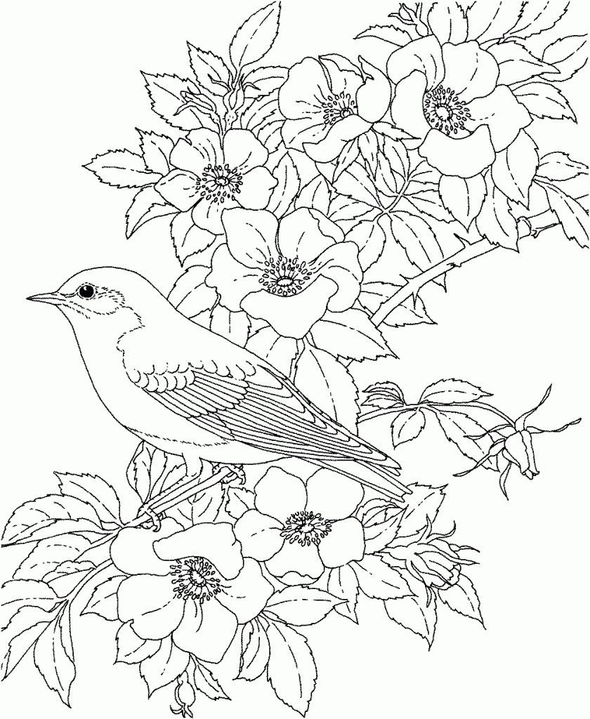 Printable Advanced Bird Coloring Pages