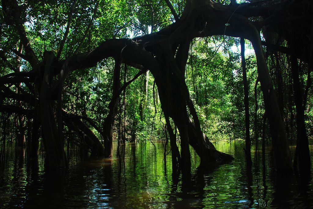 Flooded Forest Near Puerto Narino Colombian Amazon Amazonas Y