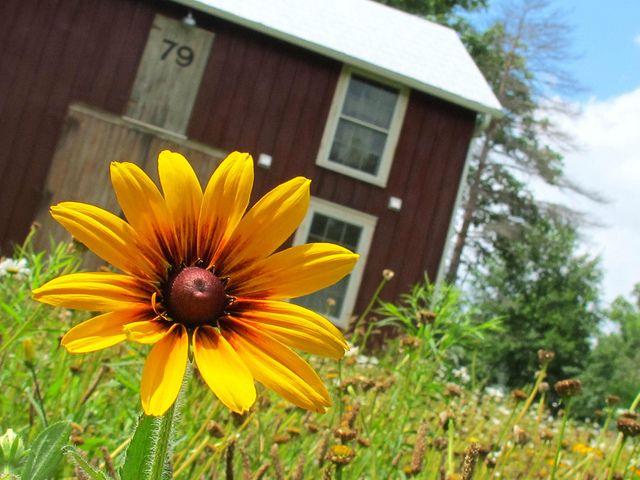 barn flower by mayalu, via Flickr