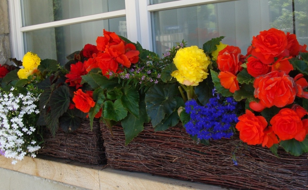 Kvetiny Na Stinnem Balkone Co Zasadit Ve Stinu A Castecnem Stinu E Zahrada Plants