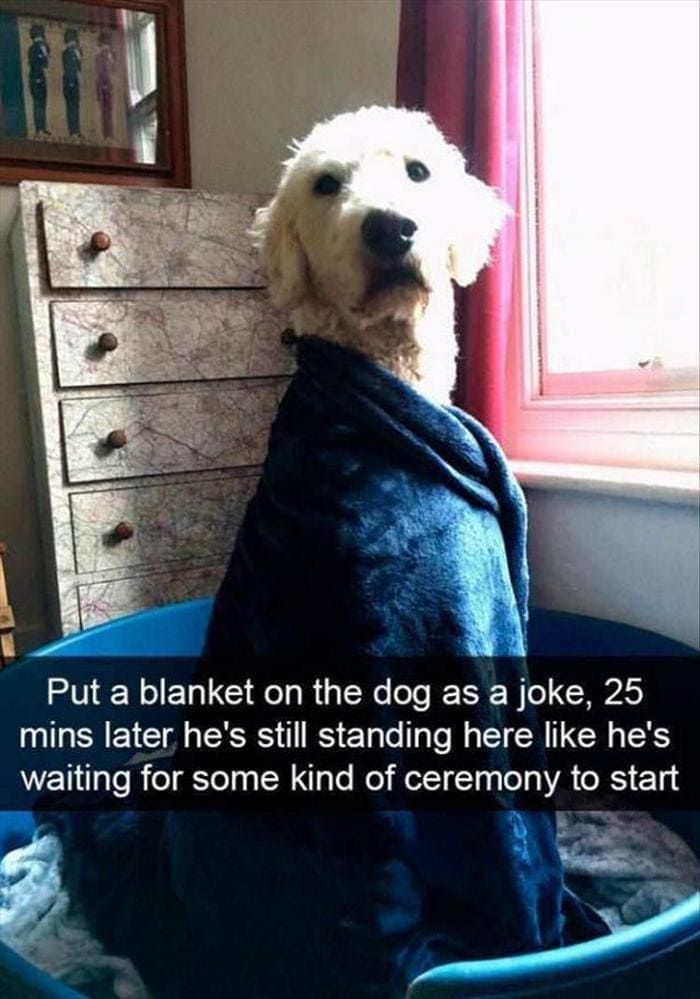 Funny Animal Pics Of The Day – Wackyy Picdump 11 (40 Photos) #funnyanimalpics