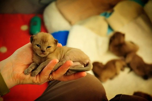 2 Week Old Kitten Care Cute Cats Pictures Cute Animals Kitten Care Beautiful Kittens