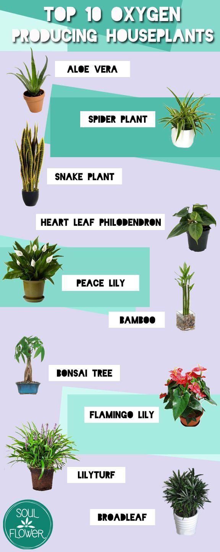 I Like This Prime 10 Oxygen Producing Houseplants