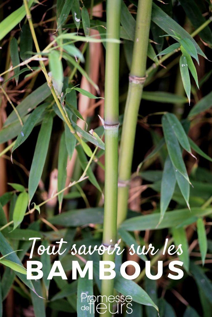 Comment Se Débarrasser Des Bambous Dans Le Jardin Épinglé sur jardin