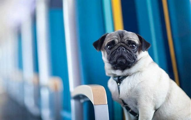 All Apawd How You Can Help Dogs Ride The Eurostar Dogs Dog